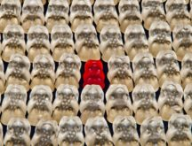 Gummibarchen fruit gums bear sweetness 54633 pexels c00 216x165